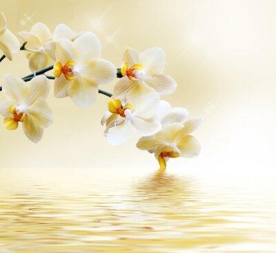 Carta da parati Bella orchidea bianca