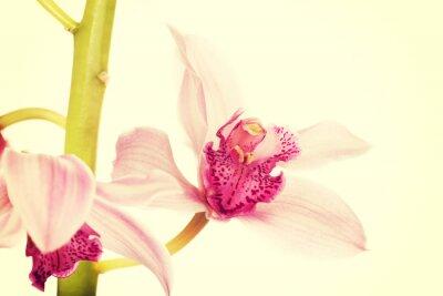 Carta da parati Bella rosa giglio fresco.