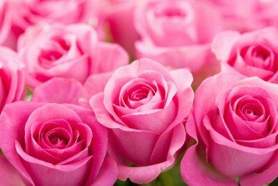 Carta da parati bella rosa rosa fiori di fondo