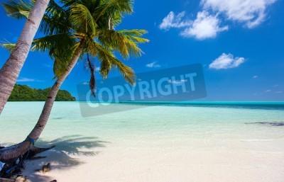 Carta da parati Bella spiaggia tropicale con palme, sabbia bianca, acqua mare turchese e cielo blu a Palau