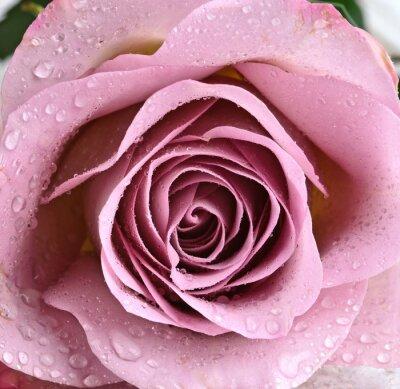 Carta da parati Bella viola rosa