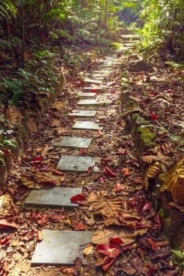 Carta da parati Bella vista della scalinata di giungla,, Thailandia