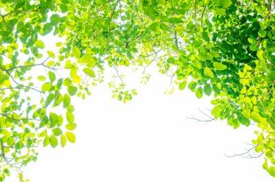 Carta da parati Belle foglie verdi su sfondo bianco