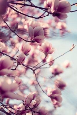Carta da parati Bellissimi fiori di magnolia rosa