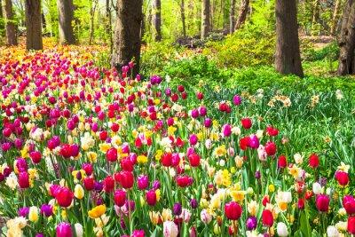Carta da parati bellissimo giardino con tulipani in fiore vividi nel parco di Keukenhof, Olanda