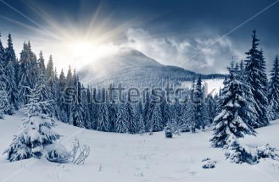 Carta da parati Bellissimo paesaggio invernale con alberi innevati