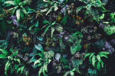 Carta da parati Bello fondo della natura del giardino verticale con la foglia verde tropicale