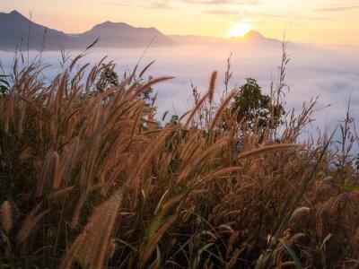 Carta da parati Bello lotto del paesaggio di nebbia Phu Thok