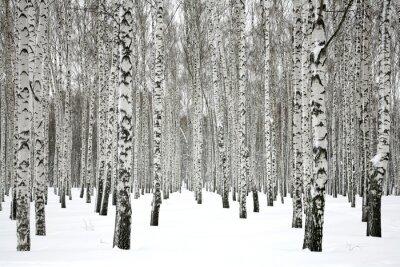 Carta da parati Betulla Winter forest