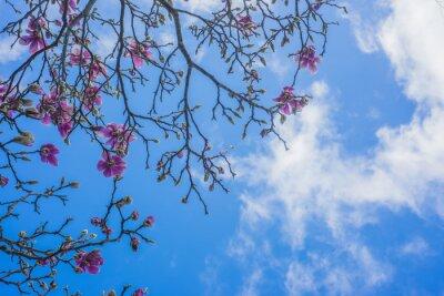 Carta da parati Blooming magnolia