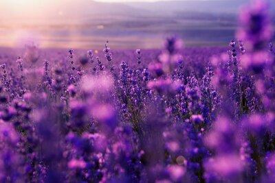 Carta da parati blurred summer background of wild grass and lavender flowers