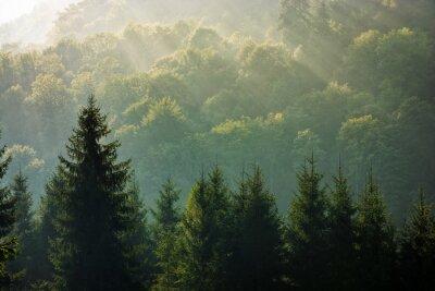 Carta da parati bosco di abete rosso su alba nebbiosa in montagna