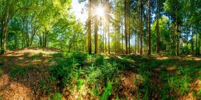 Carta da parati Bosco di vecchi alberi e il sole, che illumina una radura