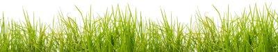 Carta da parati  brins d'herbe, fond blanc