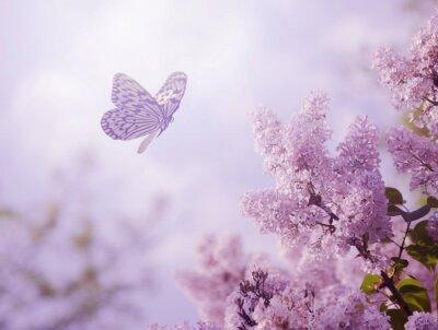 Carta da parati Butterfly and flower