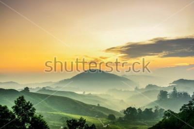 Carta da parati Cameron Highlands ,Malaysia. Sunrise  at green tea farm mountain. Dramatic moving cloud in nature landscape on sunshine morning.