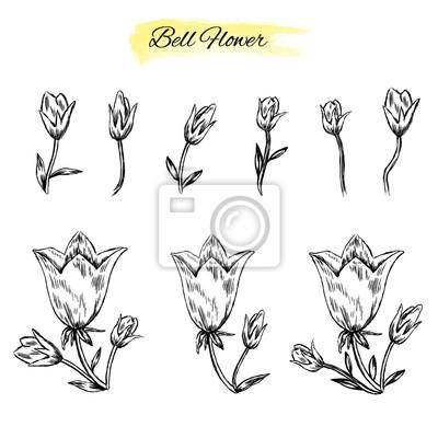 Campana Fiore Isolato Su Sfondo Bianco Schizzo Di Disegno