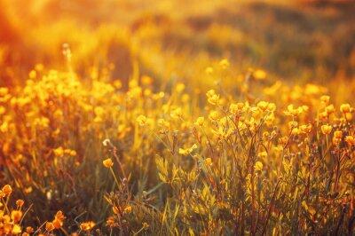Carta da parati campo dei fiori di primavera