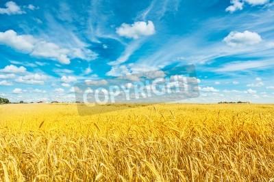 Carta da parati campo di grano dorato e cielo nuvoloso