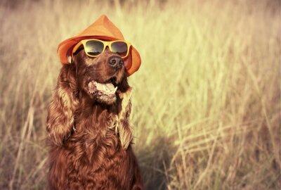 Carta da parati cane divertente