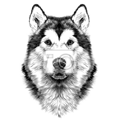 Disegno Cane Bianco E Nero.Carta Da Parati Cane Razza Alaskan Malamute Testa Simmetria Sembra Destra Sketch