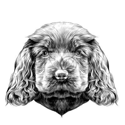 Disegno Cane Bianco E Nero.Cane Razza Cocker Spaniel Cucciolo Sketch Grafica Vettoriale