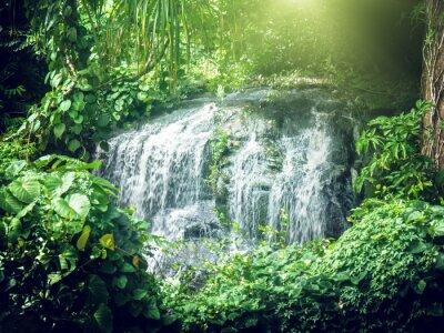 Carta da parati cascata in giungle di Seychelles, isola di Mahe