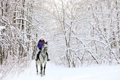 Carta da parati Cavaliere sul cavallo al bordo del innevate bosco in inverno
