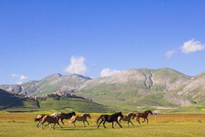 Carta da parati Cavalli al galoppo nei pressi di Castelluccio