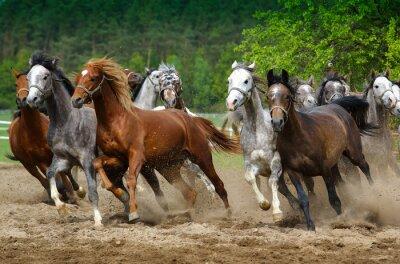 Carta da parati Cavalli arabi al galoppo