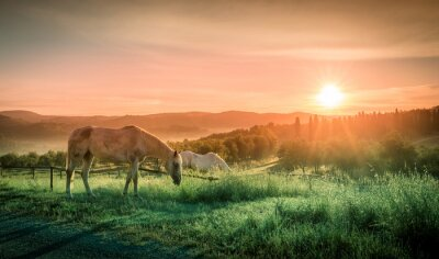 Carta da parati Cavalli selvaggi e l'alba toscana