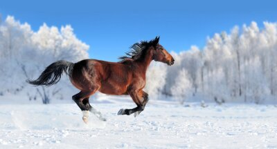 Carta da parati Cavallo