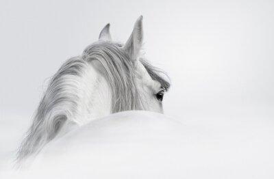 Carta da parati Cavallo andaluso in una nebbia