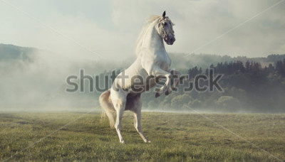 Carta da parati Cavallo bianco selvaggio