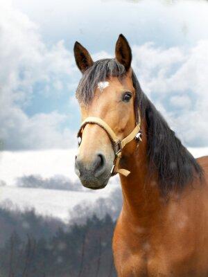 Carta da parati Cavallo in inverno
