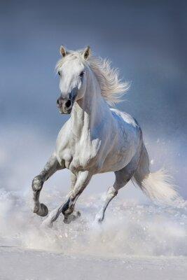 Carta da parati Cavallo in neve