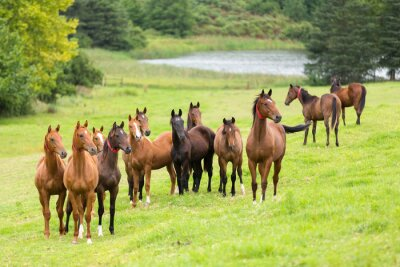 Carta da parati cavallo mandria