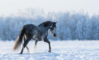 Carta da parati Cavallo solo cammina sul campo