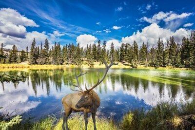 Carta da parati Cervo con corna branchy costa sul suggestivo lago