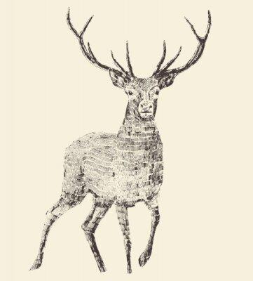 Carta da parati Cervo Incisione, Vintage illustrazione, vettore