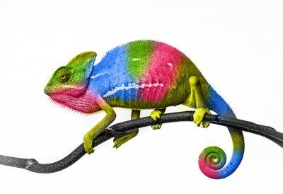 Carta da parati Chameleon - colori