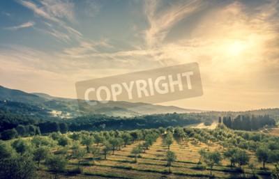 Carta da parati Cielo blu sopra il campo di oliva in Toscana