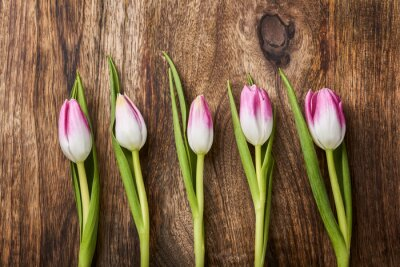 Carta da parati cinque tulipani rosa su fondo in legno