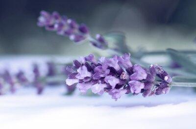 Carta da parati Cloce up di fiori di lavanda