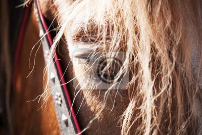 Carta da parati Close up ritratto stanco cavallo. Messa a fuoco selettiva
