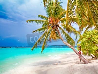 Carta da parati Coconut palm beach