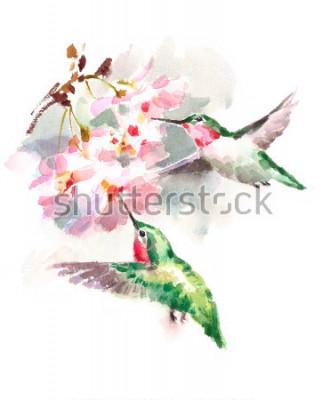 Carta da parati Colibrì degli uccelli dell'acquerello che volano intorno all'immagine disegnato a mano del giardino di fiori di ciliegio isolato su fondo bianco