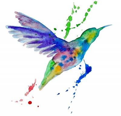 Carta da parati colibrì multicolore su sfondo bianco