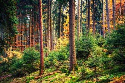 Carta da parati Colorful bosco in autunno in Germania