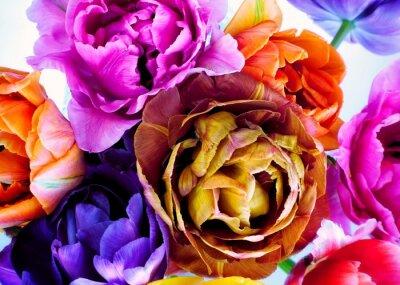 Carta da parati Colorful tulips in vintage style